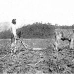 Eastern Cherokee, plowing with 1 steer
