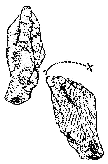 Fig. 284