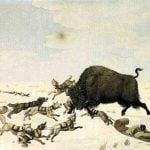 Buffalo hunting on the frozen snow