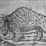 The Buffalo of Gomara, 1554