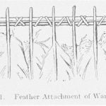 Fig. 41. Feather Attachment of Wand