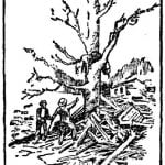 A woman's body lodged in a tree