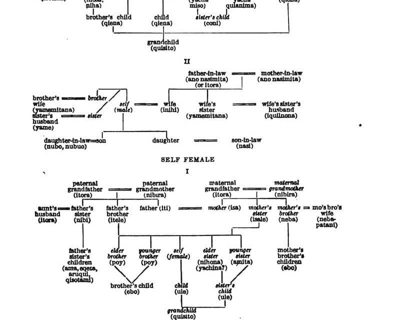 The Social Organization Of Timucua Indians Access Genealogy