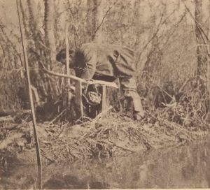Pamunkey hunter rebaiting a deadfall
