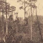 View in swamp along Pamunkey River site near Uttamussak