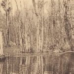 Scene in swamp hunting grounds on Chickahominy River