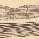 Old Pamunkey gum-wood tray for bread.