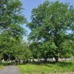 Franklin County Massachusetts Cemeteries